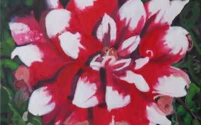 Red Dahlia